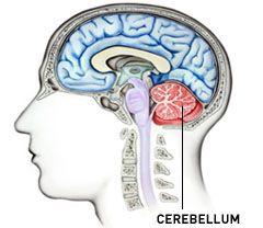 Схема мозжечка